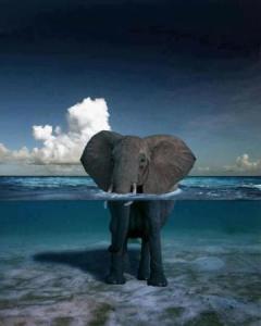 elefante-aguademar