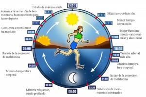 ciclo-circadiano-textos_thumb_e
