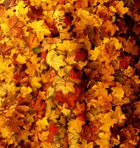 04-autumn-johannes-stoetter