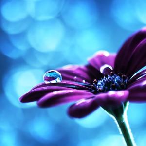 perla en flor_magicodespertar