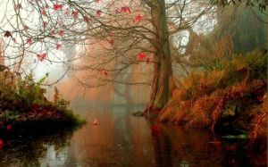 preciosa imagen del otoño_magicodespertar