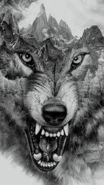 foto lobo