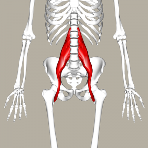 musculo_psoas-300x300