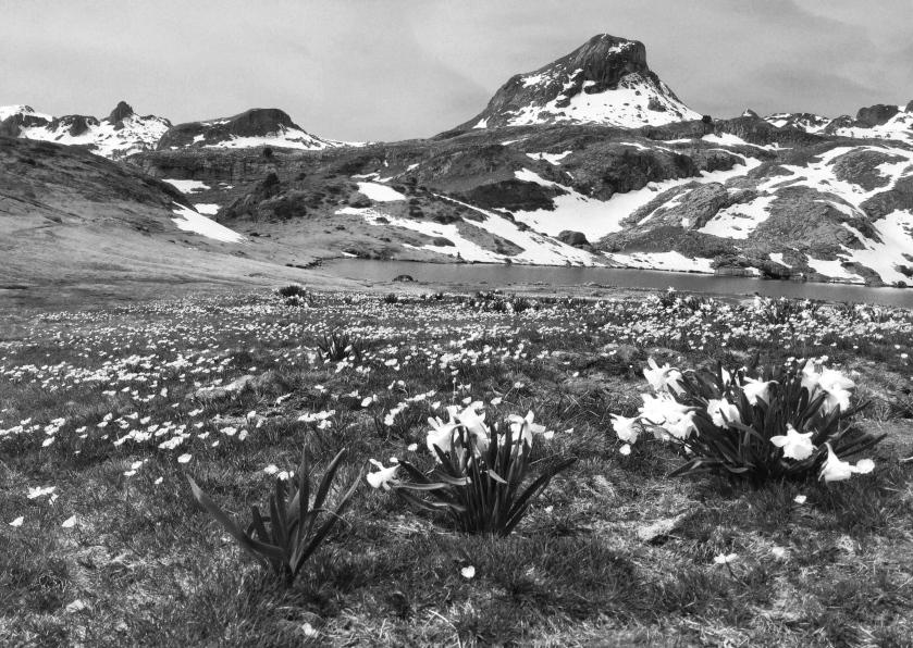 Las praderas del oeste